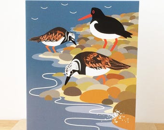 Turnstones and Oystercatcher Greetings Card