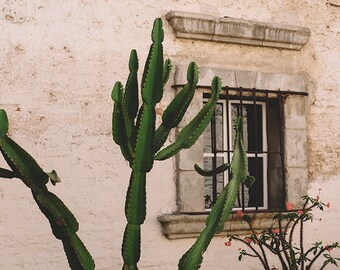Cactus Photography, Southwestern Print, Cactus Print, Southwestern Art, Cactus Wall Art, Desert Print, Desert Wall Art, Fine Art Photography