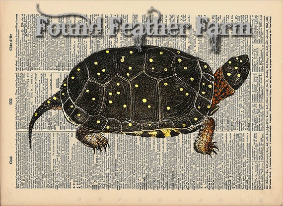 "Vintage Antique Dictionary Page with Antique Print ""Turtle Three"""