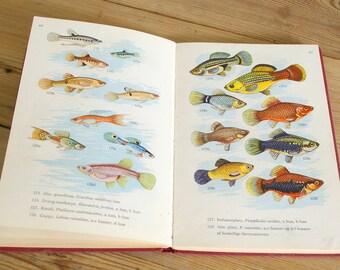 Vintage aquarium fish book.Vintage fish illustrations.Vintage fish guide.Vintage paper supply.Fish prints color.collage supply journaling