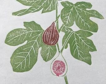 stampa di illustrazione botanica