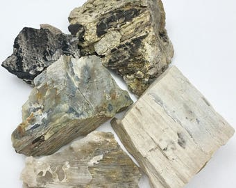 LOT of Various Types of Petrified Wood/ Fossilized Wood from Moffat County, Colorado