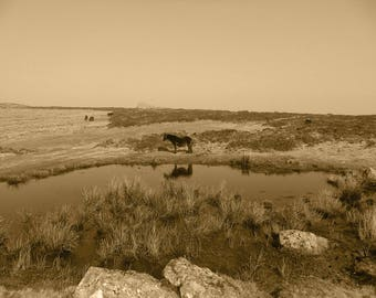 Horse photography, sepia art,  wild horse pony, fine art photography, home decor, moorland, brown, river rugged landscape