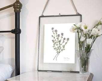 Wild Thyme, Botanical Wildflower Watercolour, Art Print