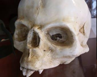 Handmade Nosferatu Fetal Skull