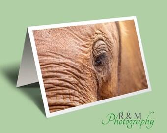 elephant greeting card - elephant photo blank greeting card - elephant close up photograph - elephant orphan - elephant - any occasion card