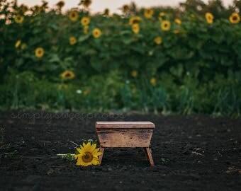 Digital Background Sunflower Garden