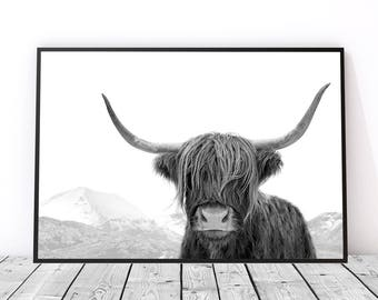 Highland Cow Print, Large Wall Art Print, Photography Print, Best Selling Art, Black and White Print, Cow Photography, Scottish Cow Art