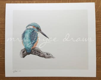 Kingfisher | Limited Edition Fine Art Print | Giclée Prints | Birds | Coloured Pencil Drawing