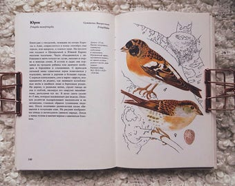 Vintage book with birds illustrations, reference book