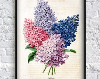 Lilac print lilac flower print  herb print floral wall art print Art-140