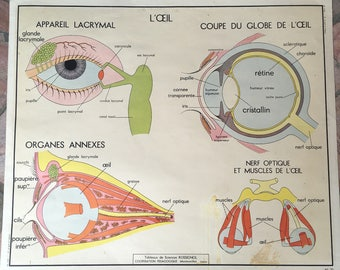 ROSSIGNOL MDI Vintage French School Poster anatomy Two Sides EYES nose 03021813