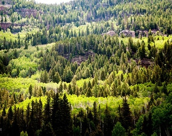 Mountain Tapestry: WALL ART Fine Art Photography Bright Sunlight Green Color Trees Mountains Colorado Scenic Outdoor Landscape