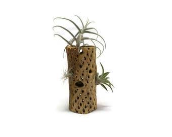 Cholla Wood - Air Plant Holder - Cholla Wood Vase with Air Plants - Air Plant Planter - Cholla Wood Vase - Air Plant Art - Air Plant Gift