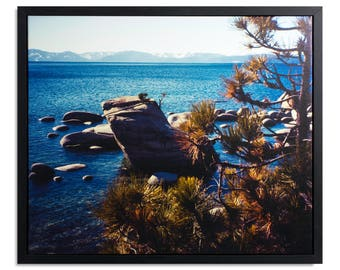"Fine Art Photography ""Bonsai Rock"" Framed Stretched Canvas"