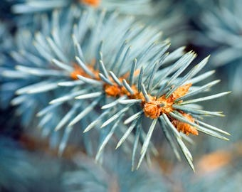 Blue Spruce - Pure Soy Candle