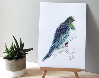 Mr Kereru, New Zealand native Wood pigeon illustration, Large print from original watercolor and ink painting artwork, Wild life Kiwiana art