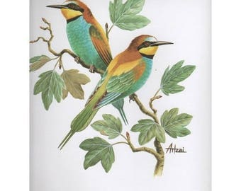 Lithograph for 3D painting 24 x 30 cm bird CASHBOOK APIASTER