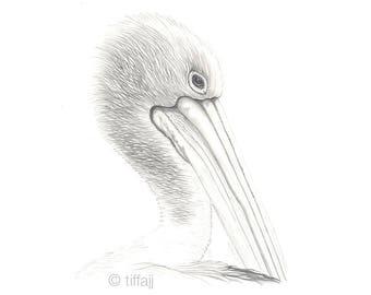 Pelican - Generosity