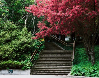 Spring Staircase - Quebec, Canada, spring, stairs, pink, tree, travel photography, film