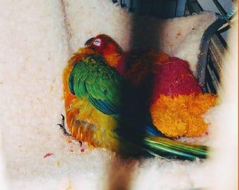Bird Hammocks