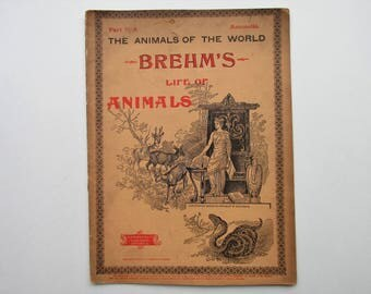 Antique 1896 Brehm's Life of Animals, Part 31-A, Illustrated, 1890's Booklet, Marquis & Company, The Cloven-Hoofed Animals: Oxen, Antelope