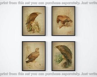 "Set of 4 prints, Dictionary print set, Eagle art vintage, Antique, Set of prints, Birds printable, Home wall decor, Set of four image, 8x10"""
