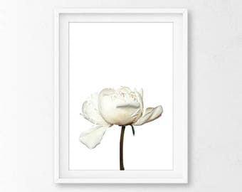 White Peony Art, Peony Print, White Flower Art Print, Floral Art Print, Spring Wall Art, Peony, White Flower, Flower Wall Art, Flower Art