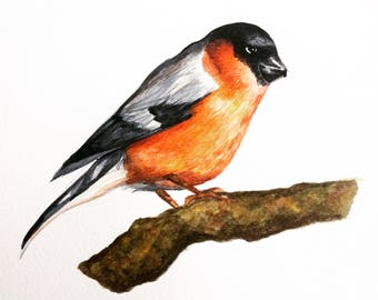 Original hand painted Bullfinch watercolour brightly coloured high quality A4 prints