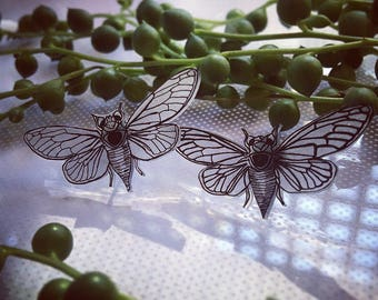 Cicada studs