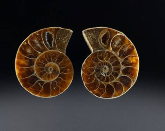Marvelous Fossil Ammonite Pair, Each 44x29.5x6mm, 38.4 cts Combined (NF1302)