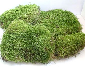Green Moss/500 grams/Real Forest Moss/Natural Dried Moss/Natural green Moss