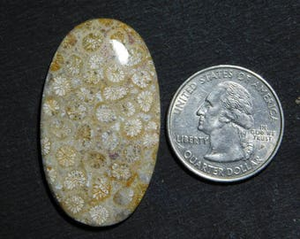 Awesome! Fossil Coral loose gemstone Amazing cabochon gemstone natural Excellent gemstone smooth polish handmade 48.65cts (41x24x5)mm