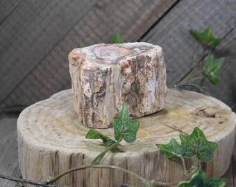 Large Petrified Wood Chunk