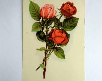 Vintage postcard Russian postcard 1970s Roses USSR Soviet postcard Old postcard Floral postcard Roses illustration