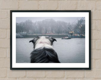 Dog watching boat River Thames. Photography Prints,home decor,home prints, gifts, wall art, prints, gift ideas, home accessories, art prints