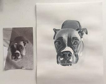Custom Pet Portrait on Media Paper