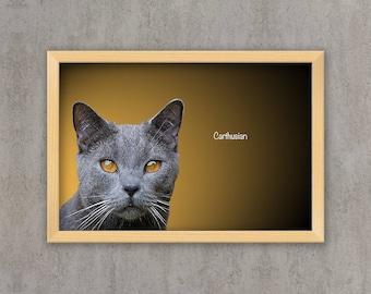 Carthusian - Cat breed poster, wall sticker, nursery decor, cat print, wall print, nursery print, shabby print | Tropparoba 100% made Italy