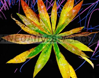 """SOFT SHOCK--- original photo transferred to thin, lightweight metal 12""""x12"""" one of a kind no duplicates made weed flower"""