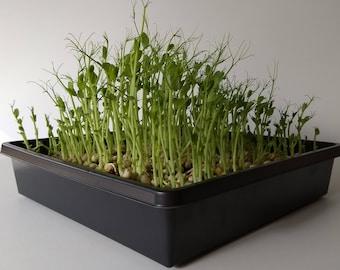 Microgreens Kit – Good Old Peas