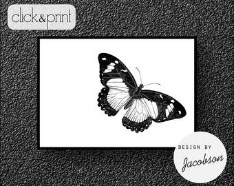 Butterfly Print, Butterfly Art, Insect Art, Insect Print, Modern Print