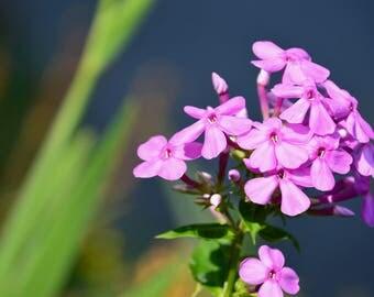 Original Purple Flowers Photo