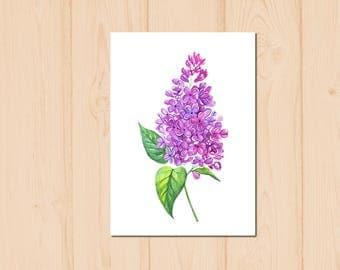 Purple Lilac Flower Watercolour Painting Drawing Art Print N159