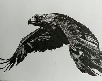 Golden eagle original art print. Black and white pen and ink drawing.