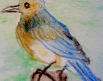 Eastern Bluebird Watercolor Painting, Original Painting, US Bird Art, A7 Painting
