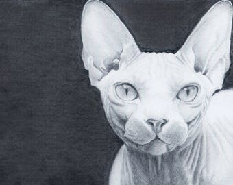 Hand drawn custom pet portrait