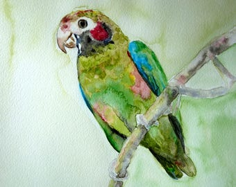 the Parrot watercolor