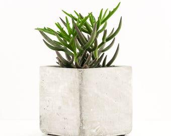 Succulent in a square concrete pot