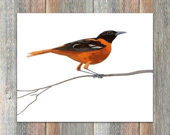 Baltimore Oriole Bird Print