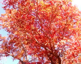 Autumn/Fall photography print